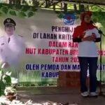HUT Ke 342 BREBES, Warga Igirklenceng Tanam Ribuan Bibit Kacang Macadamia