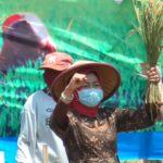 Ditengah Pandemi Covid-19, Pertumbuhan Sektor Pertanian di Brebes Justru Meningkat